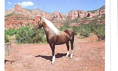 Horse Chance's Sampson —photo