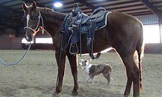 Horse Rpl Smart LIL Autumn —photo