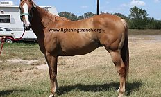 Horse Mr Ranchero —photo