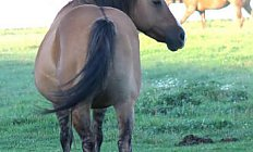 Horse Tessas Poco Penny —photo