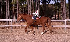 Horse Big Red —photo