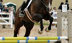 Horse Royal Manaka —photo
