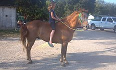 Horse Sunny —photo