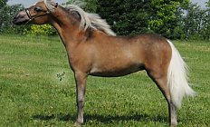Horse Mini Ridge Azul —photo