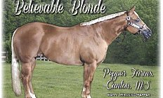 Horse Believable Blonde —photo