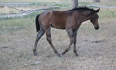 Horse Topaz's Filly —photo