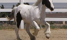 Horse GRF Tanis —photo